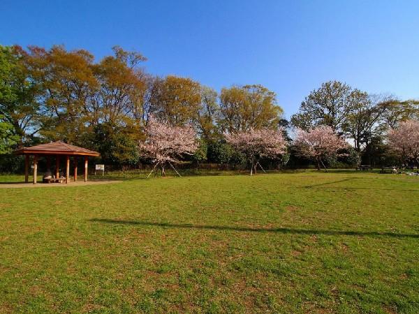 高津区市民健康の森 春日台公園(野球場が併設されている広々とした公園。都市圏にありながら森林浴が楽しめるほど、自然豊かな場所です。)